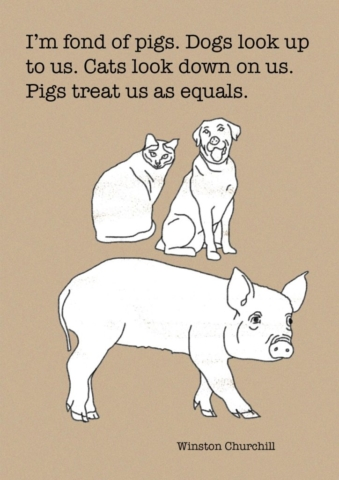 'I'm fond of pigs. Dogs look up to us. Cats look down on us. Pigs treat us as equals.' - Winston Churchill
