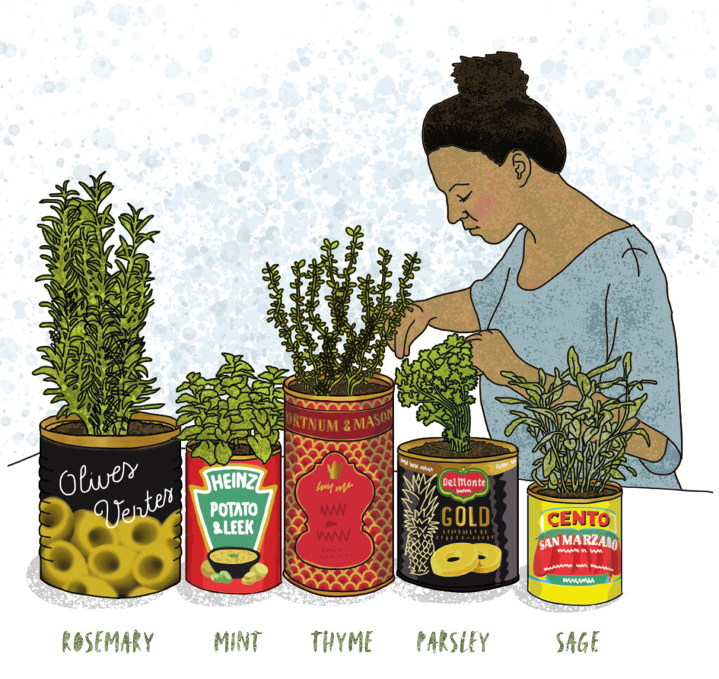 Growing herbs at home illustrated by Claire Huntley