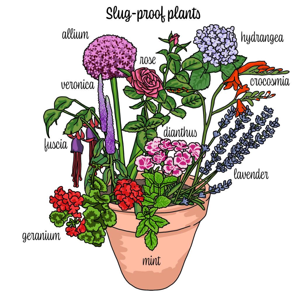 Slug-proof plants